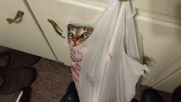 funny-cats-catnip-6