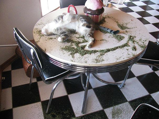 funny-cats-catnip-7