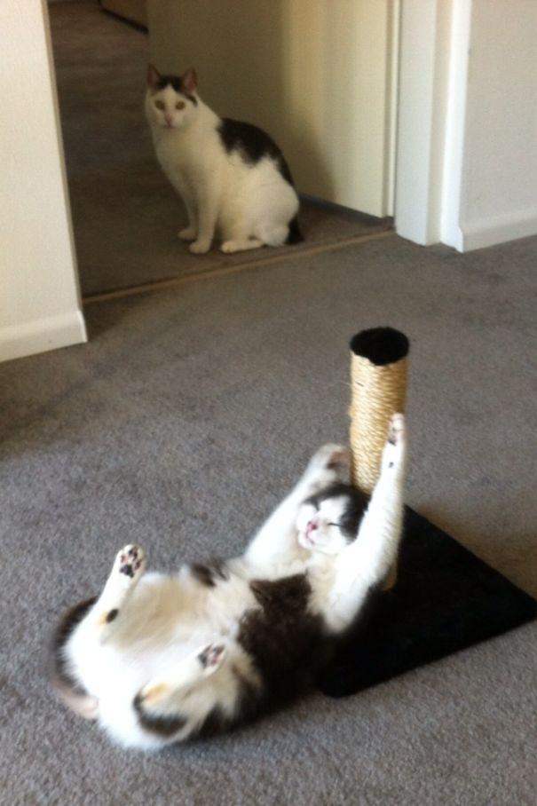funny-cats-catnip-9