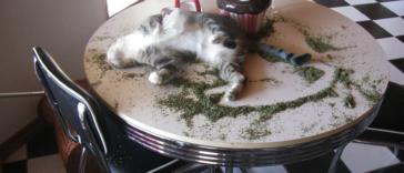 funny-cats-catnip-fb33