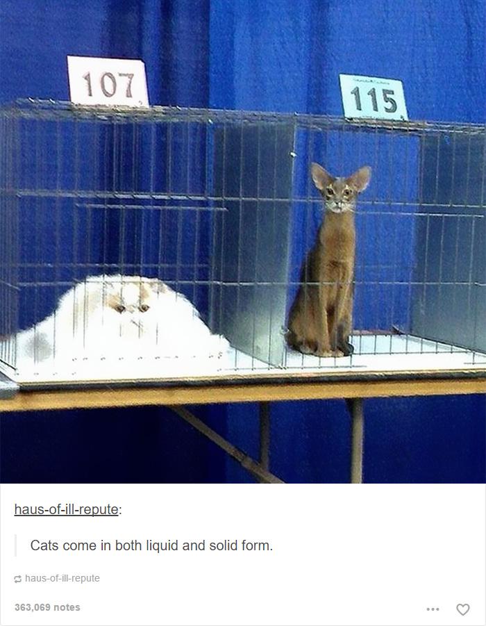 funny-tumblr-cats-1
