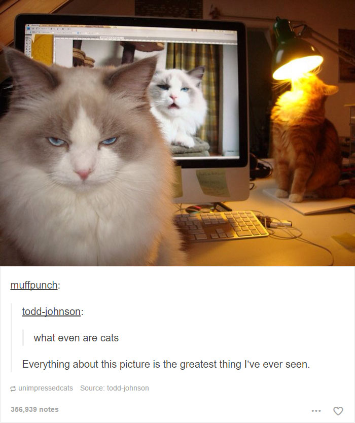 funny-tumblr-cats-12