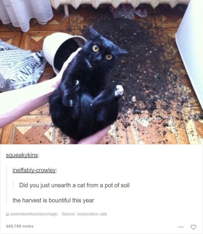 funny-tumblr-cats-14