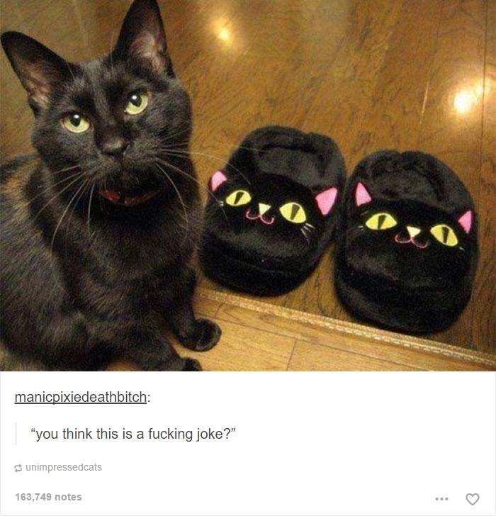 funny-tumblr-cats-15