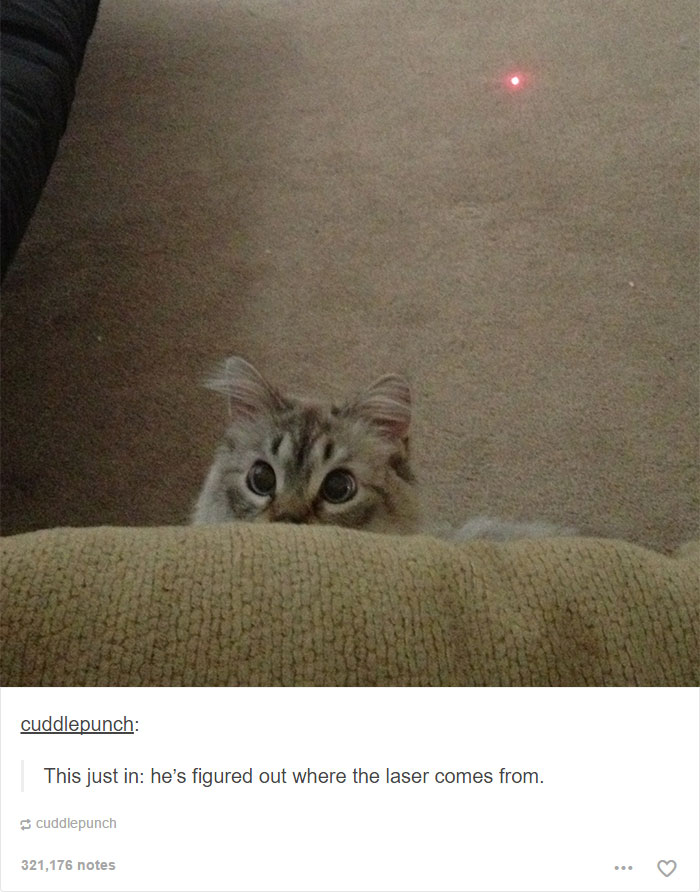 funny-tumblr-cats-17