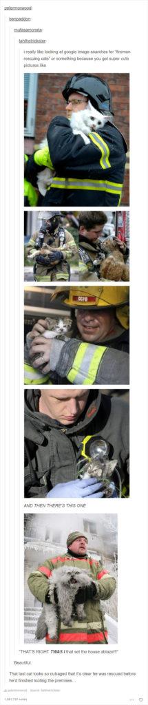 funny-tumblr-cats-2