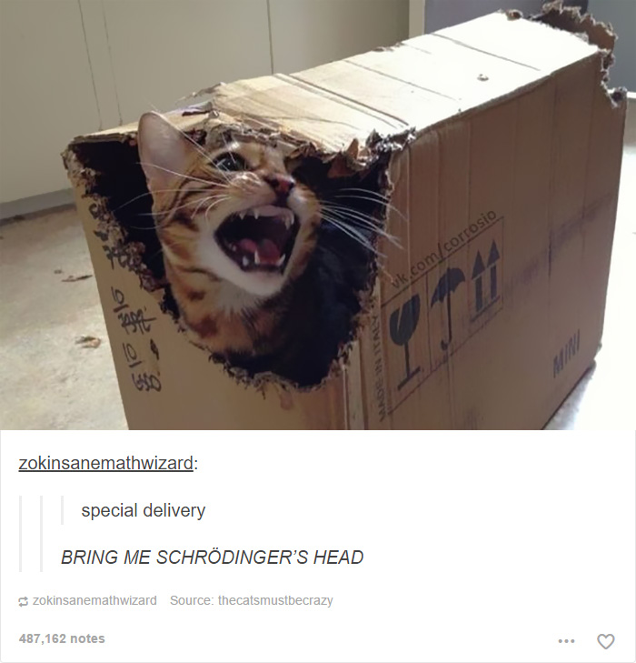 funny-tumblr-cats-21