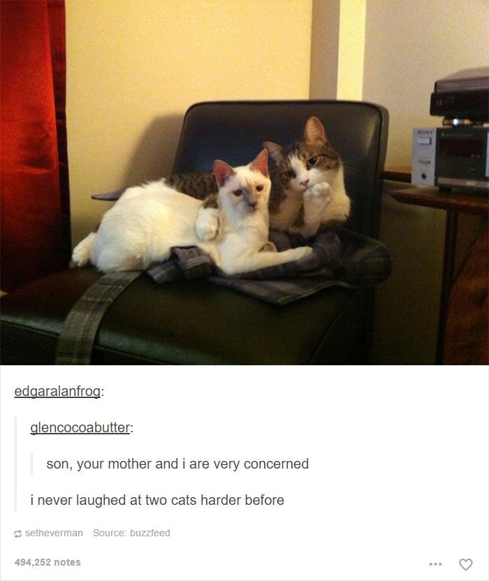funny-tumblr-cats-23