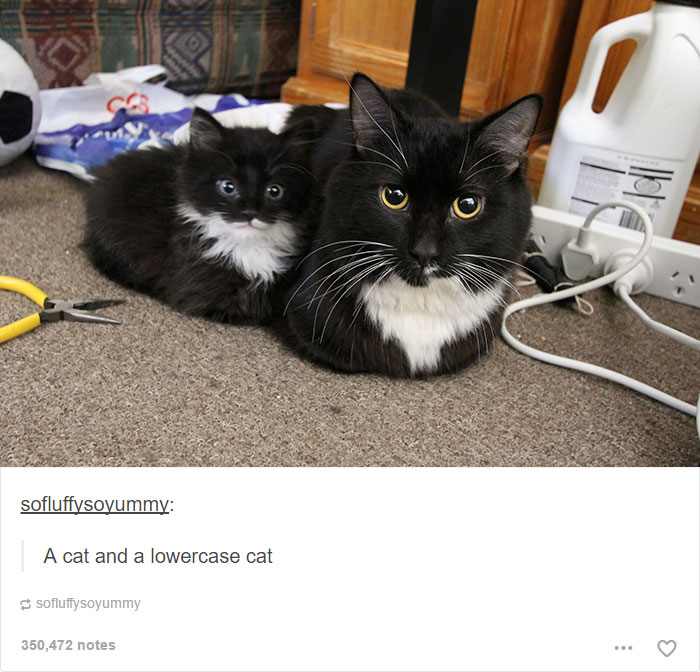 funny-tumblr-cats-24