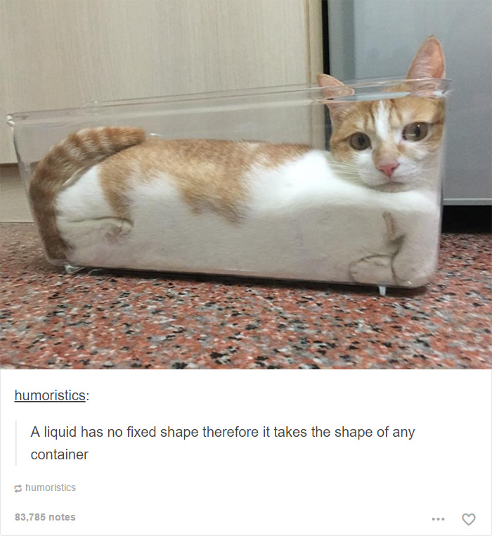 Funny Cat Meme Tumblr : Cat posts on tumblr that are guaranteed to make you