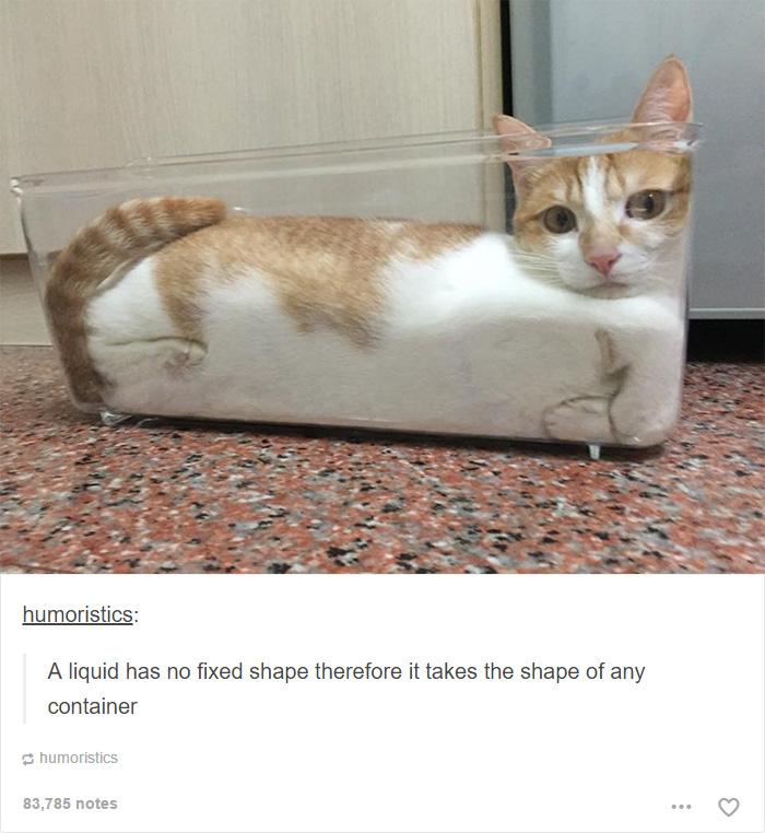 funny-tumblr-cats-25