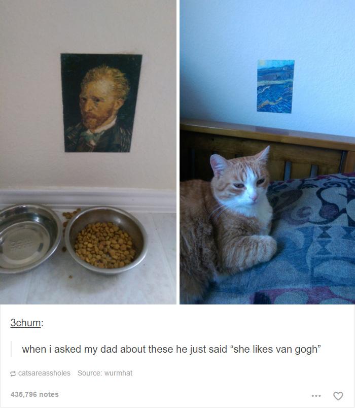 funny-tumblr-cats-27