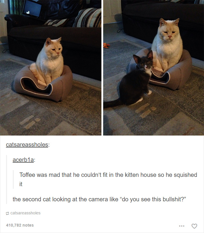 Cat Posts On Tumblr That Are Guaranteed To Make You Laugh - 20 cat posts on tumblr that are impossible not to laugh at