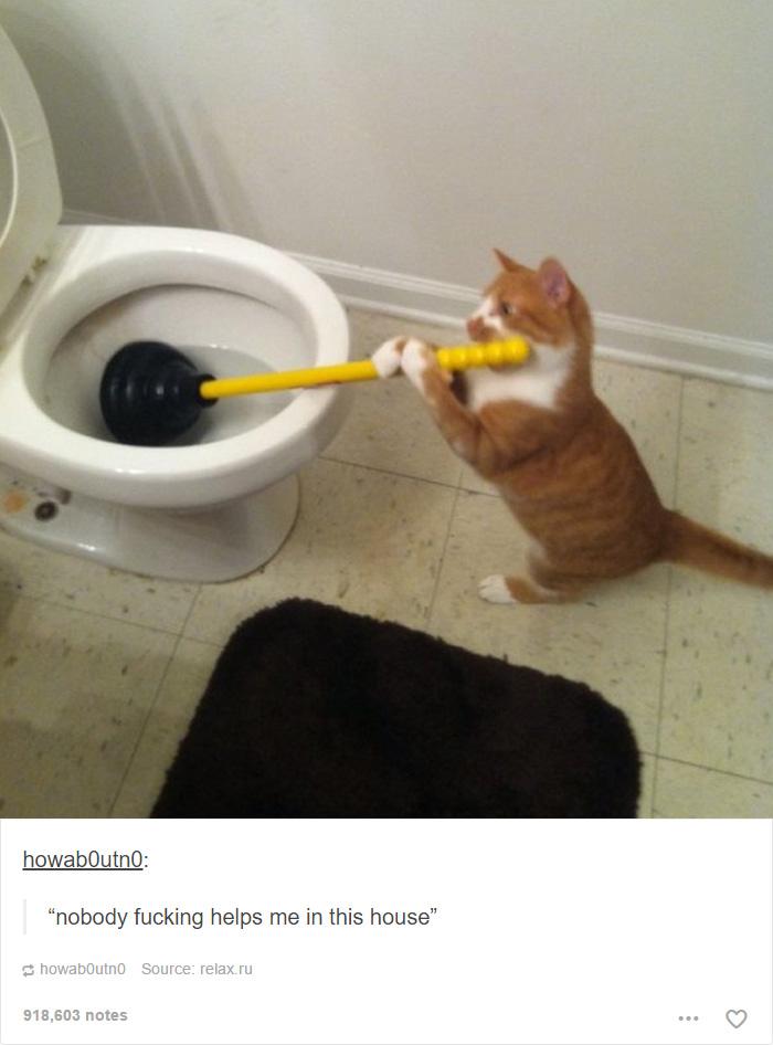 funny-tumblr-cats-3