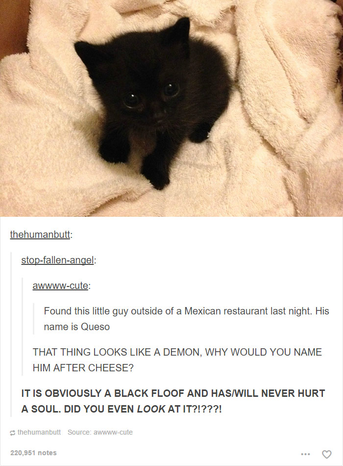 funny-tumblr-cats-31