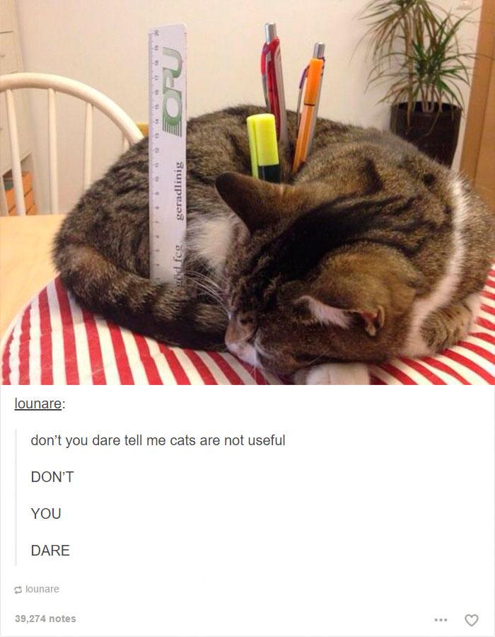 funny-tumblr-cats-34