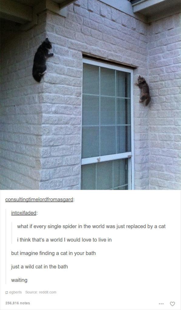 funny-tumblr-cats-36