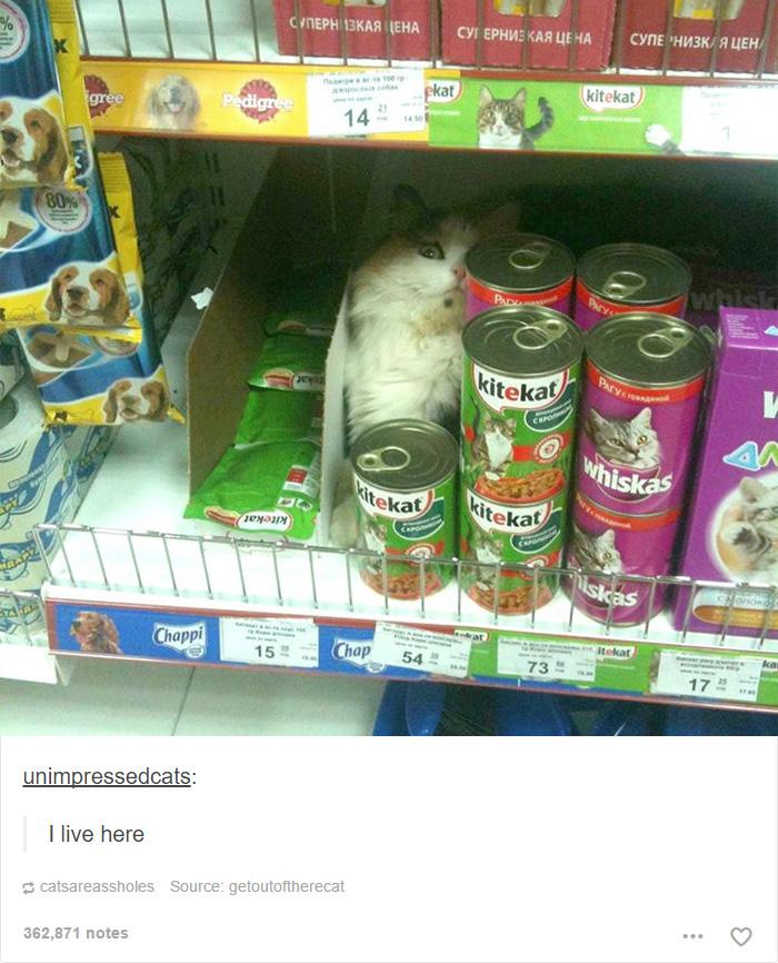 funny-tumblr-cats-37