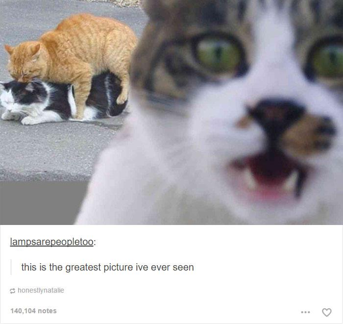 funny-tumblr-cats-38