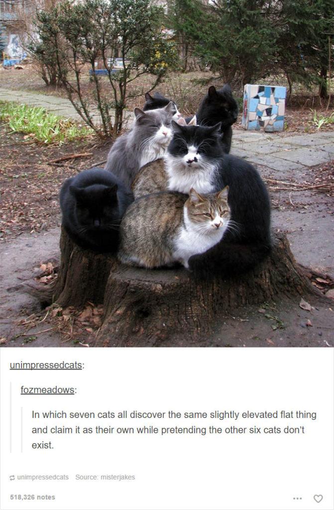 funny-tumblr-cats-39