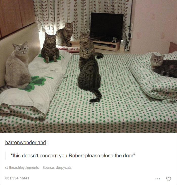funny-tumblr-cats-4