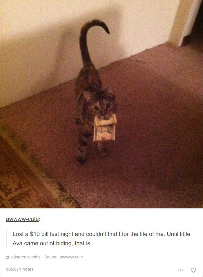 funny-tumblr-cats-40