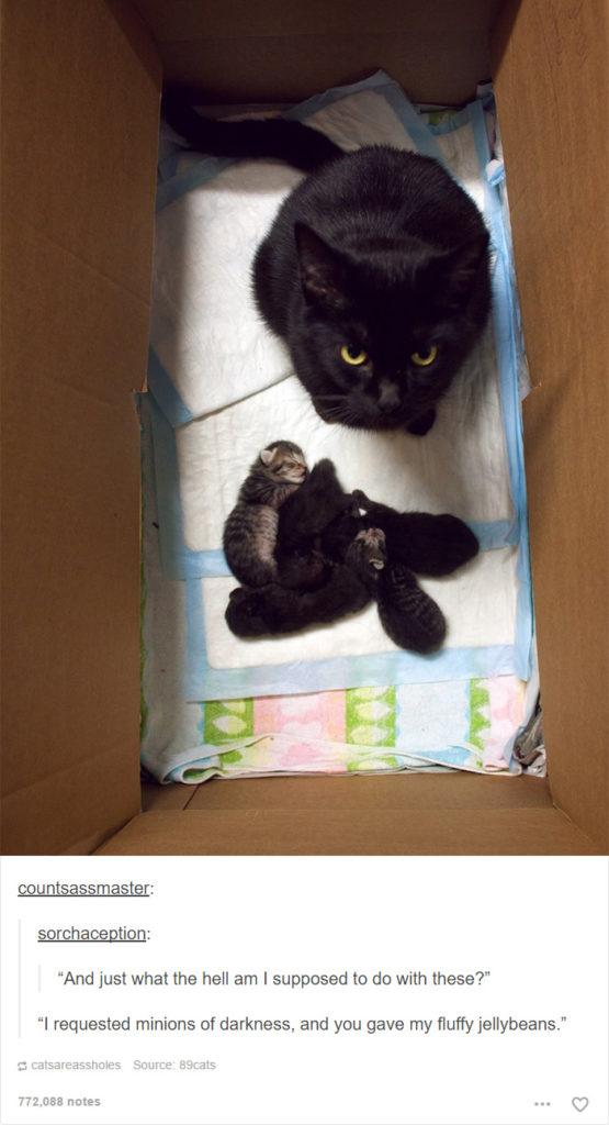 funny-tumblr-cats-6