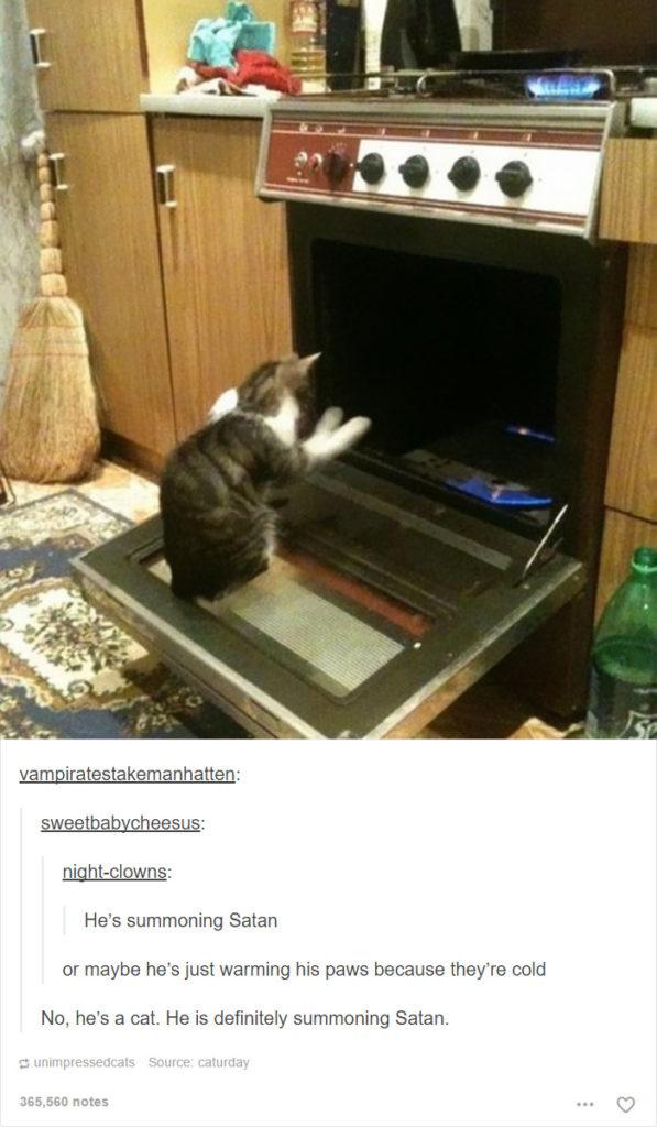 funny-tumblr-cats-7