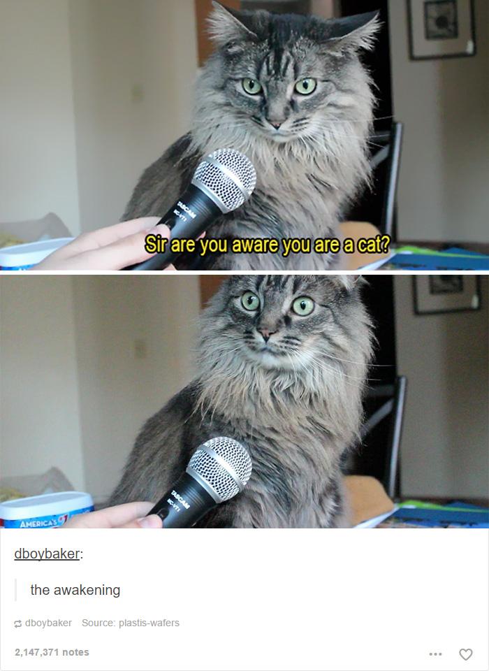 funny-tumblr-cats-8