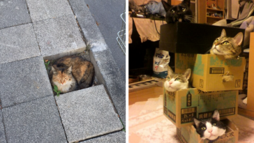 if-it-fits-i-sits-post-your-photos-of-cats-fitting-into-tightest-spaces-fb