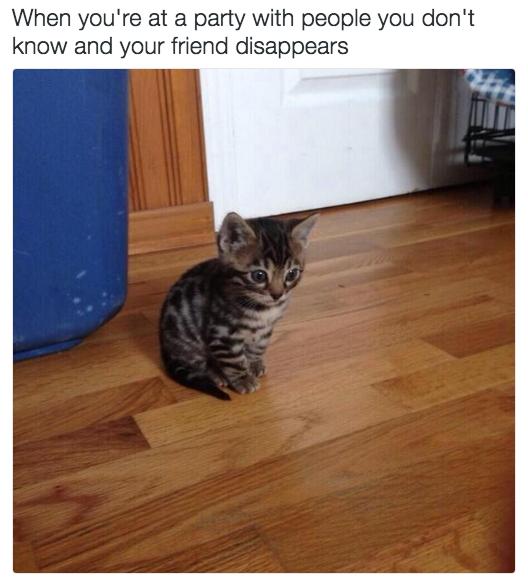relatable-cat-03