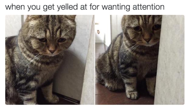 relatable-cat-04
