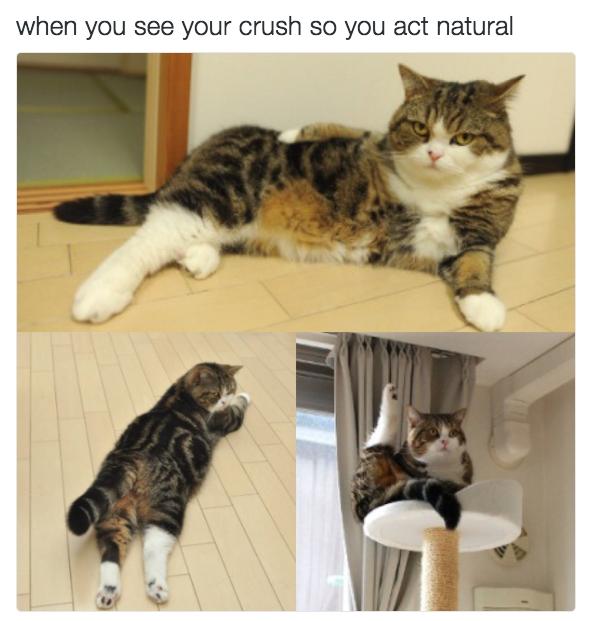 relatable-cat-05