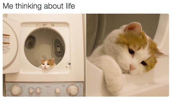 relatable-cat-07