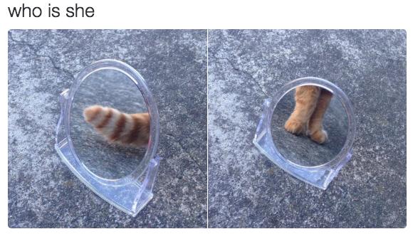 relatable-cat-08