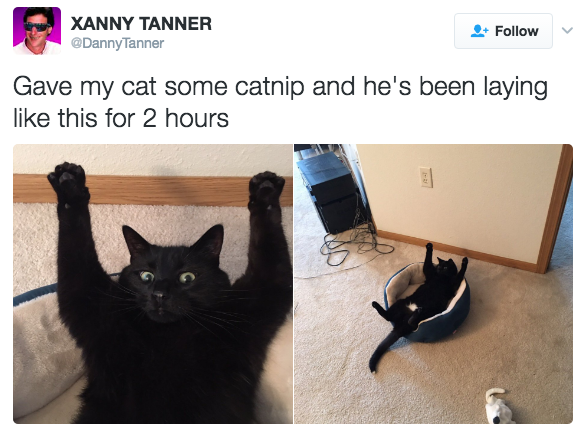 relatable-cat-09