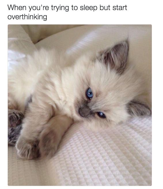 relatable-cat-10