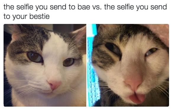 relatable-cat-12
