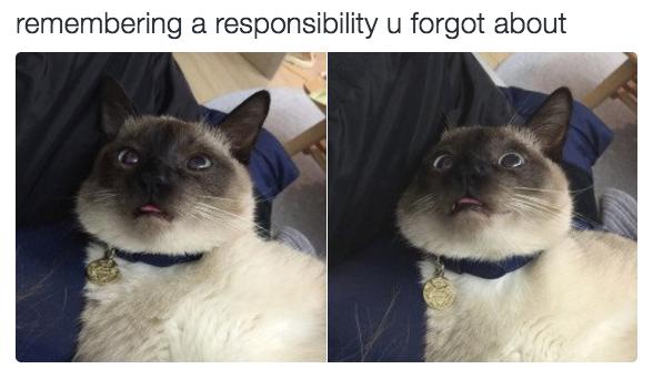 relatable-cat-16