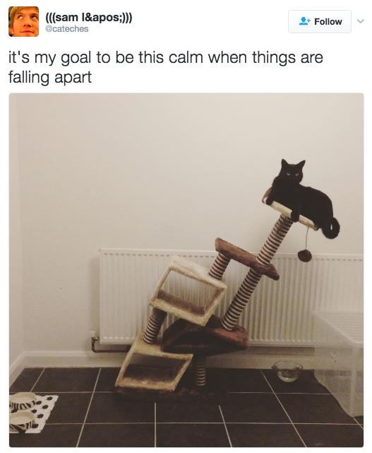 relatable-cat-17