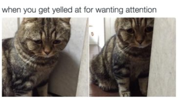 relatable-cat-feature