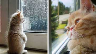 Featured-Cats-Waiting-Window
