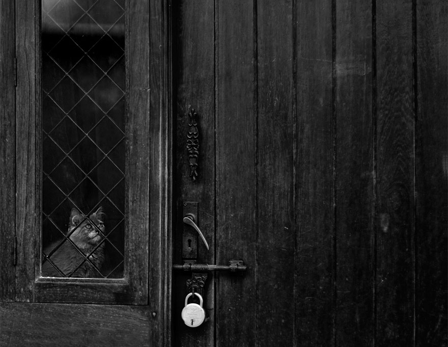 cat-waiting-window-15