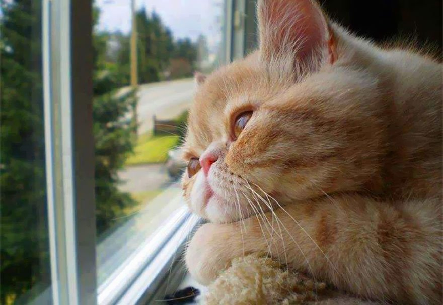 cat-waiting-window-65