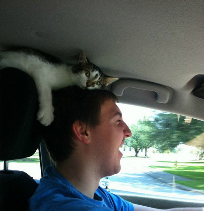 Cats-Personal-Space-13