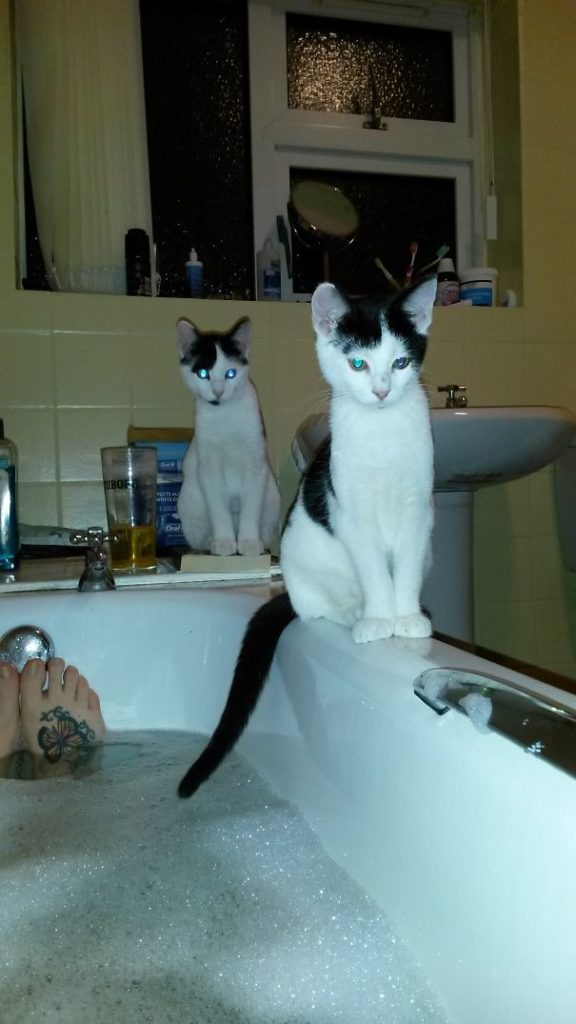 Cats-Personal-Space-36