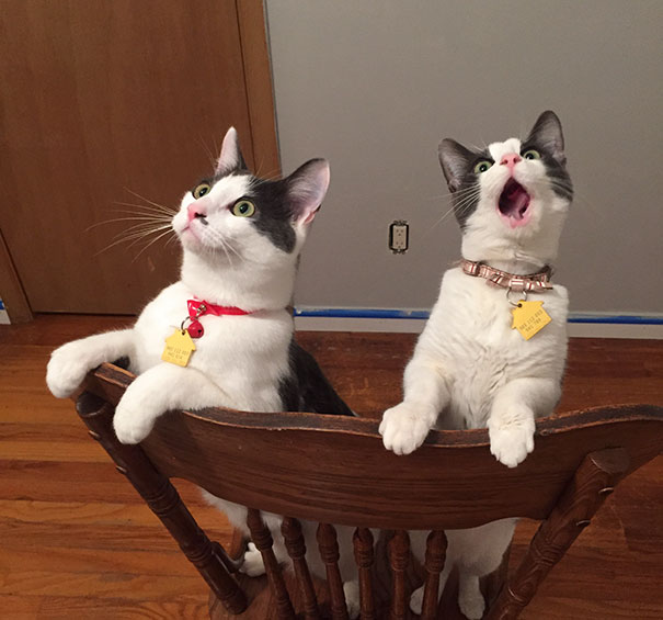Overly-Dramatic-Cats-14