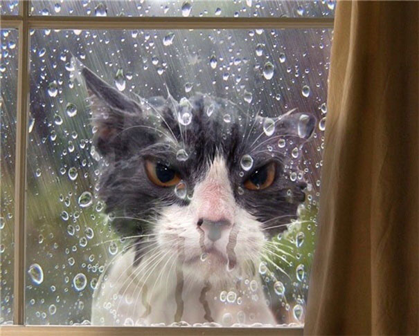 Overly-Dramatic-Cats-20