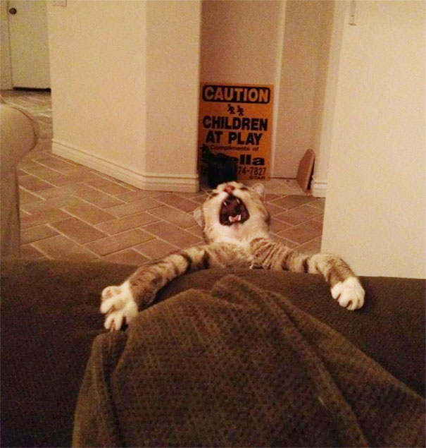Overly-Dramatic-Cats-4