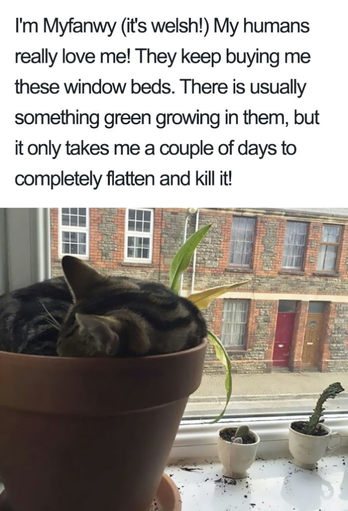 funny-cat-shaming-17
